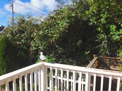 porch view, before (Allan's photo)
