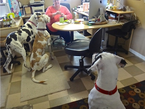 Keleigh at her desk, with the three Danes at attention for a treat.