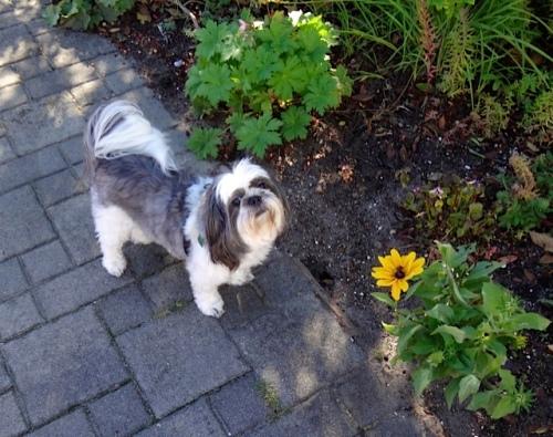our good friend Mitzu (Allan's photo)