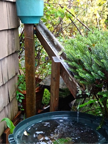 3.14 inches of rain fell today. (Allan's photo, rain gutter by the shed)
