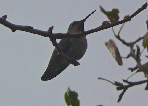 This hummingbird must be so glad the wind has gone.