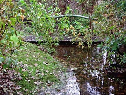 bogsy wood bridge