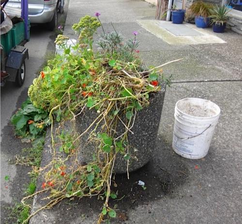 Allan's photos: planter before
