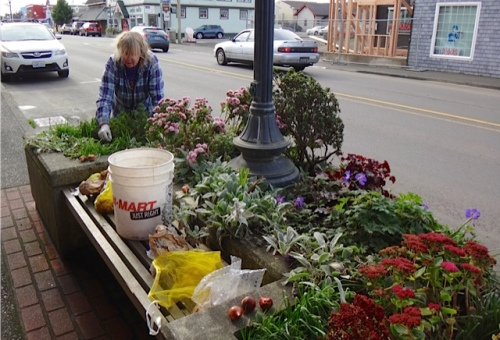 squeezing bulbs into a busy planter by NIVA green