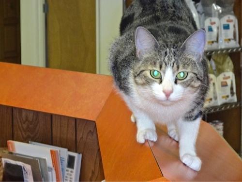 veterinarian office staff (Allan's photo)