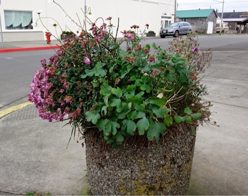Allan's photos: a planter, before