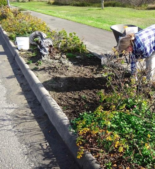 planting in freshly weeded areas