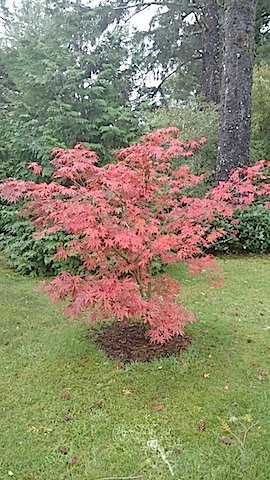 fall color maple, photo by Steve McCormick