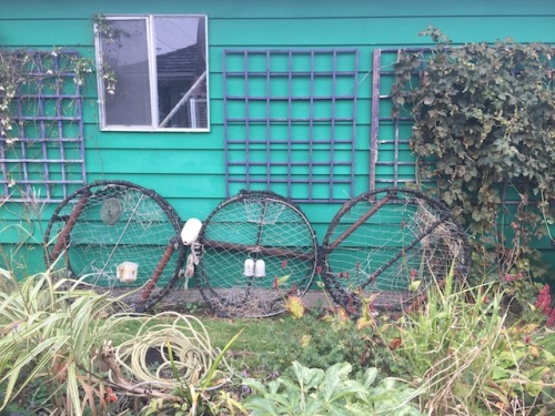 The crab pots, formerly part of the front fence, are now on the west side of the garage. Next year: some sort of small vine here, I think.