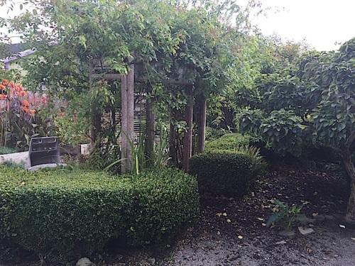 dreamy boxwood hedge