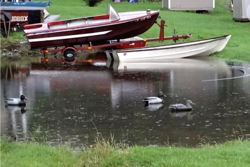 by the Cove RV Park, next to our former house: Allan says those are not real ducks.