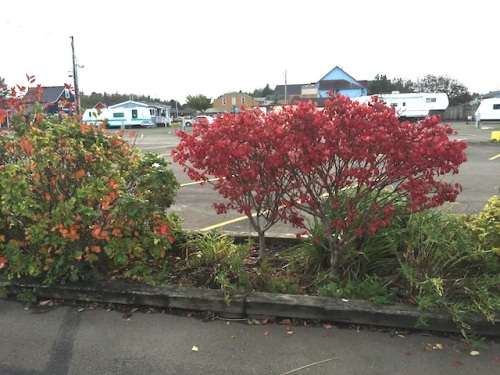 parking lot gardens fall colour