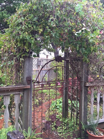 Goodbye to the honeysuckle and clematis arbor just east of the central courtyard.