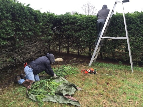 Mel tarping debris while Dave uses hedge shears for the final cut.