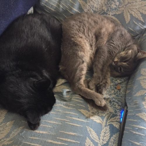 Calvin and Smokey