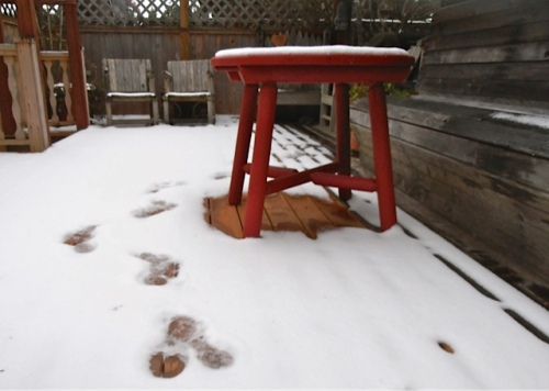 snow on the deck, December 2013 (Allan's photo)