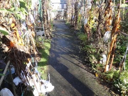 the corridor of spooky plants, de-cobwebbed