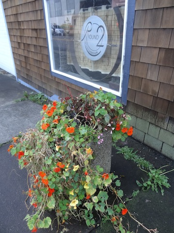 I'll leave these nasturtiums for a frost.
