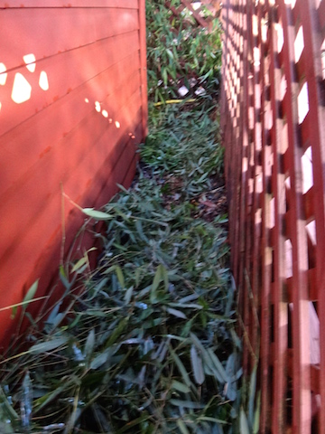 Allan's photos: passage of chopped bamboo