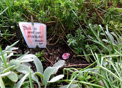A helpful sign has been installed in the planter that was getting inundated with butts. No butts today!