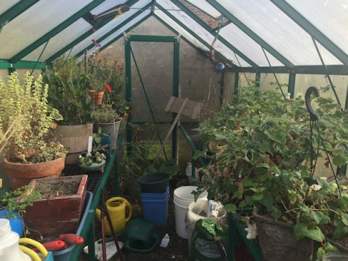 the morning in the greenhouse