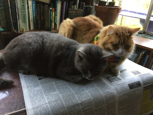 While I was outside, Smokey and Skooter took over the desk.