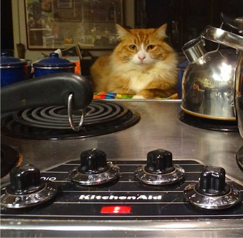 4 December: Skooter watched Allan make dinner