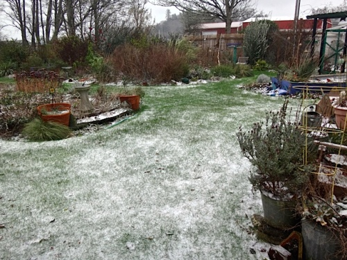 Wind kept snow from accumulating in the back garden. (Allan's photo)