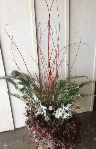an admirable winter planter