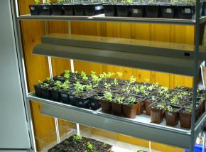 meuble néon à plantes.JPG