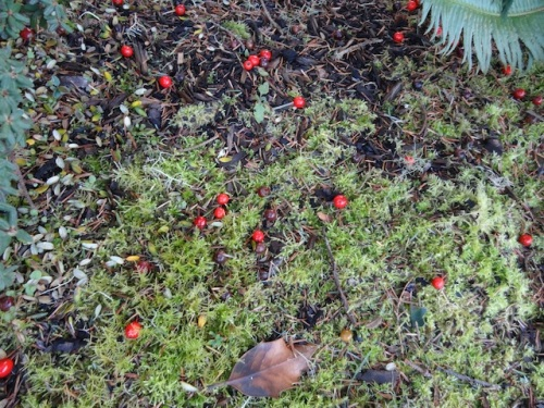 moss and berries