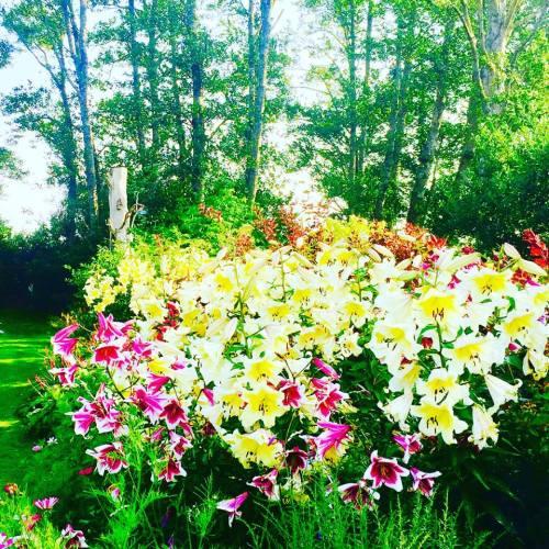 lilies3.jpg